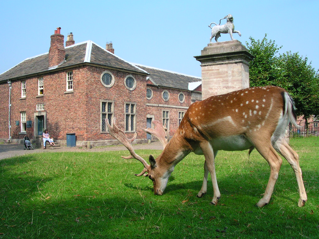 Deer at Dunham Massey, Cheshire